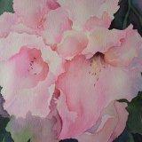 Rhododendron, by Jan Pursey-Grange