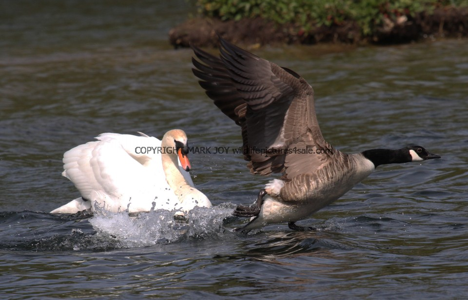 canada goose factory caledonia castlefield