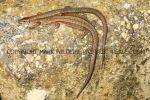 Gallery 9 Reptiles