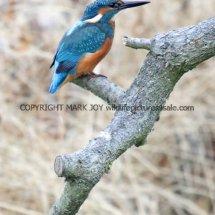 KIngfisher 6 (5)