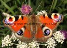 Gallery 2 Butterflies