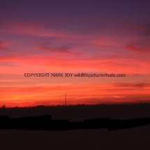 Quadring Fen Sunsets (1)