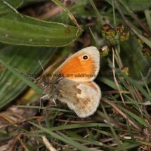 Small Heath (4)