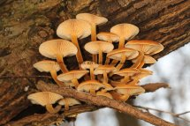 Gallery 6f Fungi in Bedfordshire