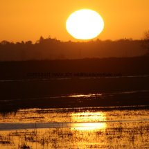 Sunrise over The Ouse Washes (4)