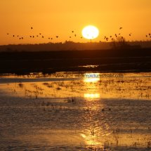 Sunrise over The Ouse Washes (5)