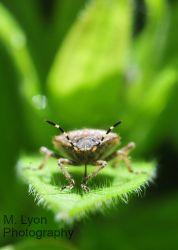 Bokeh Bug