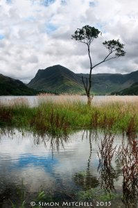 Lone Tree Over Buttermere