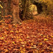 A Walk into Autumn