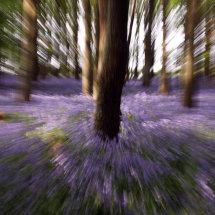 Rushing through the Woods