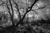 St Johns Wood _1