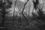 St Johns Wood_3