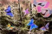"""Butterfly Fantasy"""