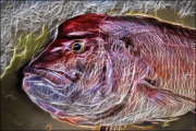 """Fish Abstract"""