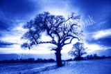 Arundel Winter Landscape