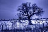 Arundel Cold Wind Blows