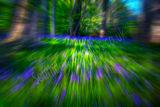 Bluebells Blur