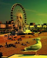 Brighton Seagull & Ferris Wheel