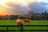 Cows and Arundel