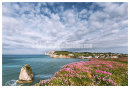 Freshwater Bay  Pinks.