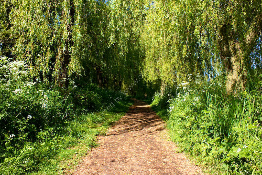 Reservoir path 7