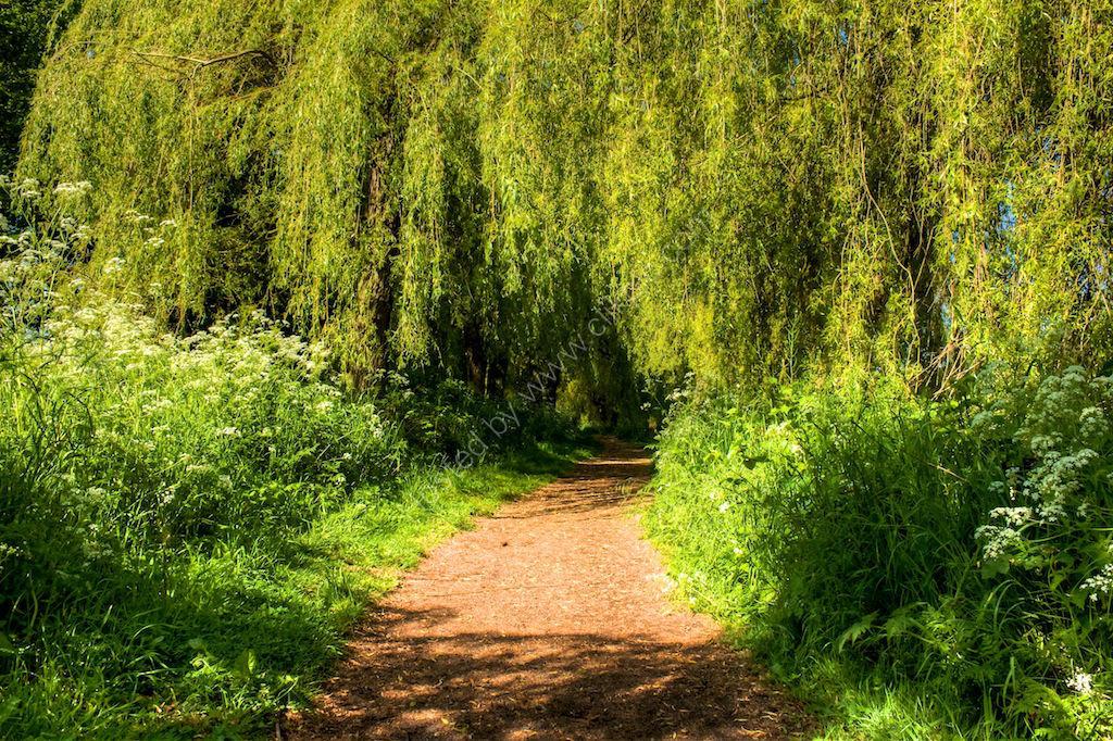 Reservoir path 3