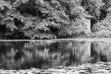 China Pond Reflections