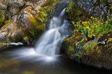 Mimulus Falls