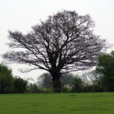The Tree - View from my garden