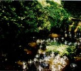 Nove ninfee e 64 sfere di cristallo, Pratolino Fontana di Giove