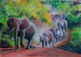 Elephants - Pafuri