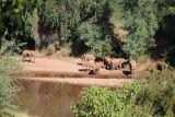 Elephants drinking - Pafuri