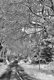 Winters Lane
