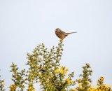 Winter Warbler 2
