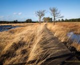 Windy Thursley