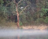 Heron through the Mist