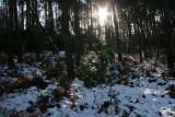 Wintery sun