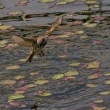 Fishing - Sparrow style