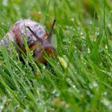 Snail Patrol