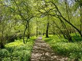 Garston Wood