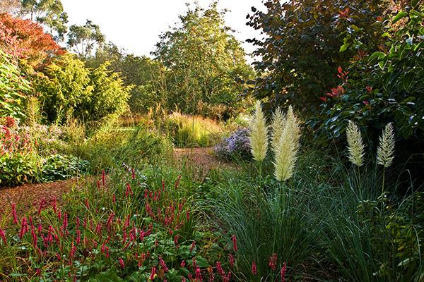 Knoll Gardens, Specialist Grasses
