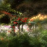 Roses at Giverny