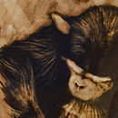 Contemplation Young Chimpanzee