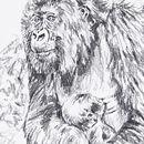 Female Mountain Gorilla and baby
