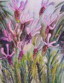 Lavendula Pendunculata.