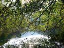 Overhanging tree in Wye Valley, Derbyshire Peak District