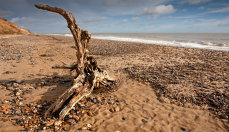 The Beach at  Covehithe