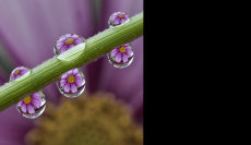 Water Droplet Flowers