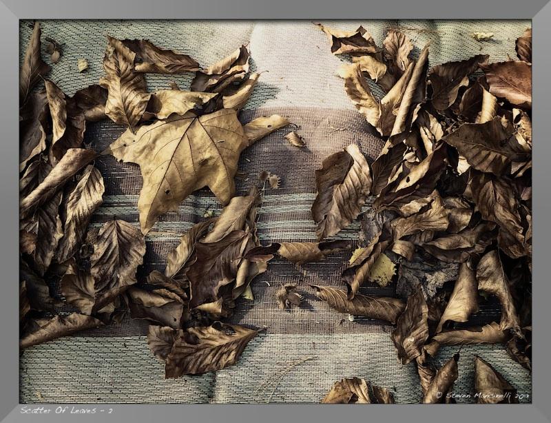 catter of Leaves - 2