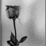 One Rose And Glass